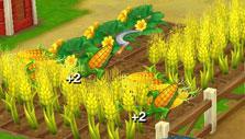 Wild West: New Frontier: Harvesting crops