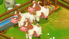 Raise animals in Hay Bay Farm