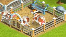 Cows in FarmLand