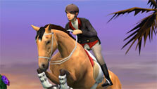 Competition in My Horse
