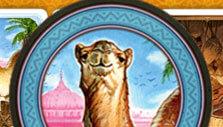 Jaipur: Camel token