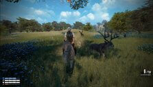 Riding a horse alongside deer in New Frontier