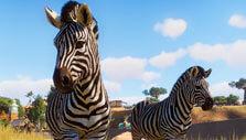 Zebras in Planet Zoo