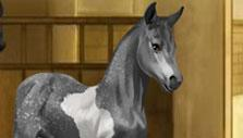 Howrse Foal