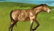 Howrse Roaming Horses