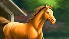 Howrse Beautiful Horse