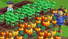 Ripe pumpkins in Farmville 2
