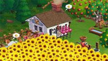 Farmville 2: A field of sunflowers