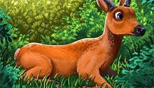 My Free Zoo: Marsh Deer