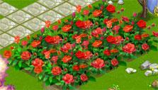 Flower Ville: Red roses