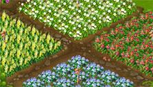 Flower Ville: Flower farms