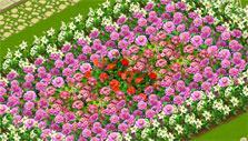 Pretty flowers in Flower Ville