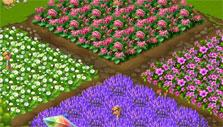 Another flower farm in Flower Ville
