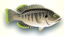 Fish World: Silver Sunfish
