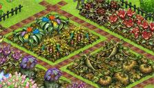 Withered crops in Charm Farm