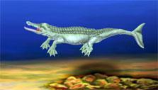 Dino Water World: Metriorhynchus