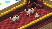 Adorable puppies in Wauies