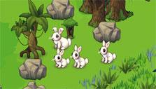 Oasis: growing rabbits