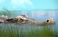 Favorite Aquatic Dinosaur