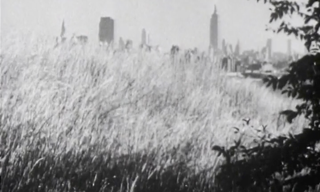 New York skyline behind a field of tall grass.