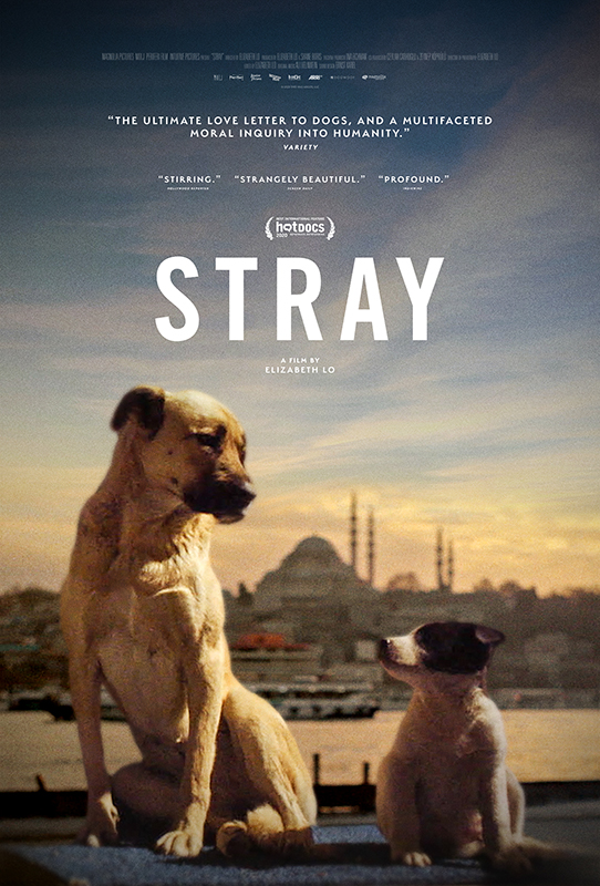 Poster for Stray