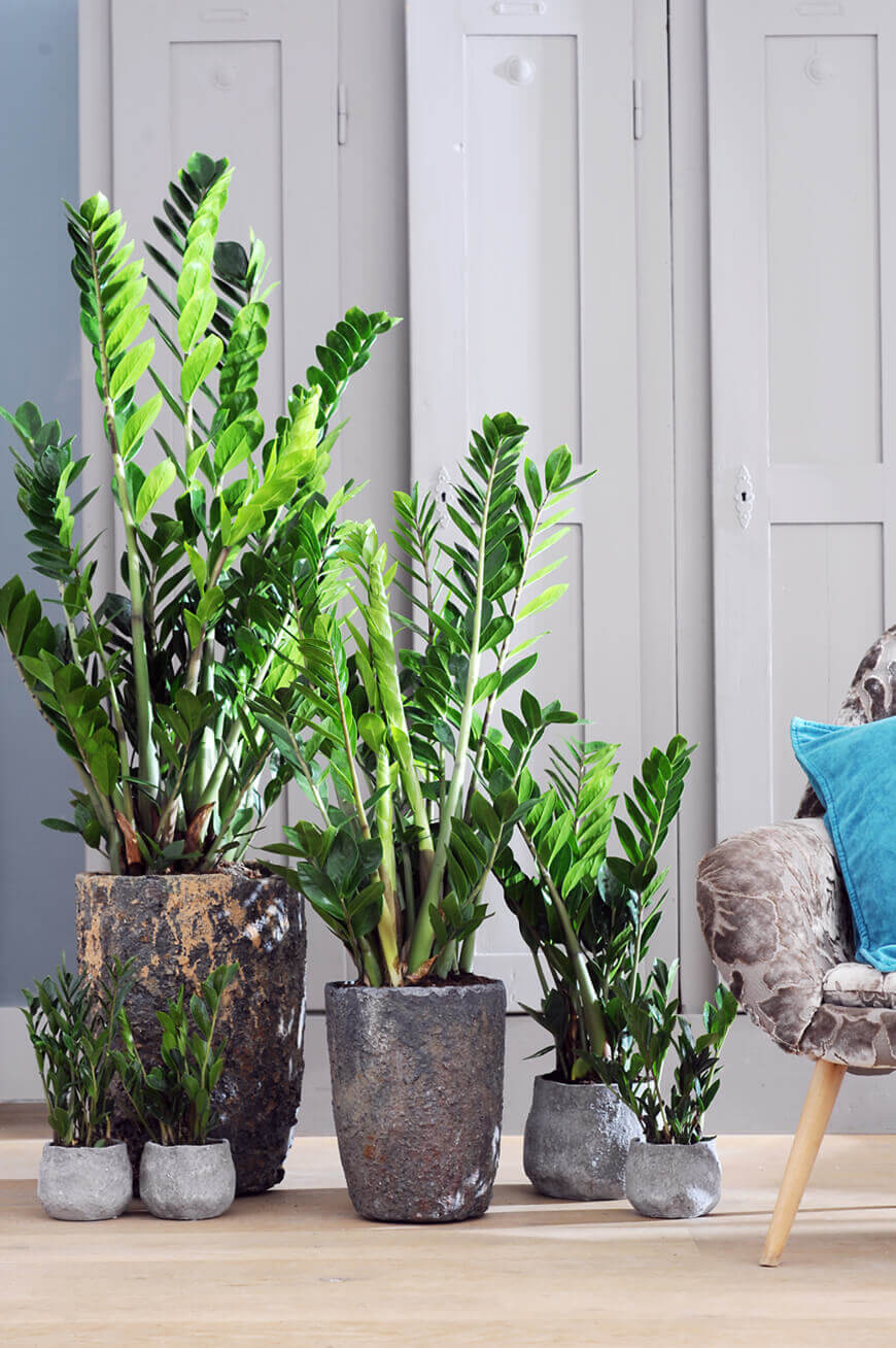 decoracao-plantas-ambientes-internos-studio-lab-decor-22