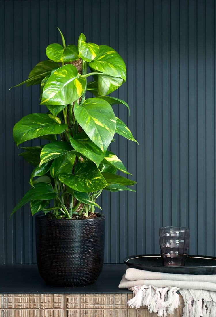 decoracao-plantas-ambientes-internos-studio-lab-decor-14