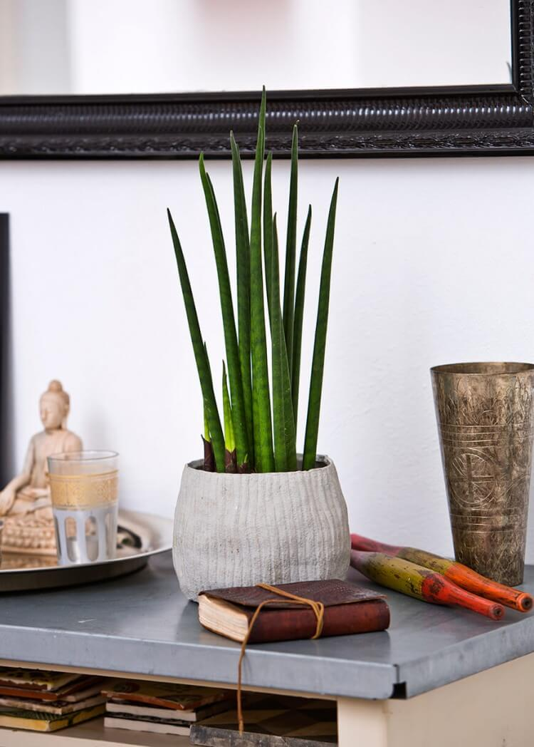decoracao-plantas-ambientes-internos-studio-lab-decor-9