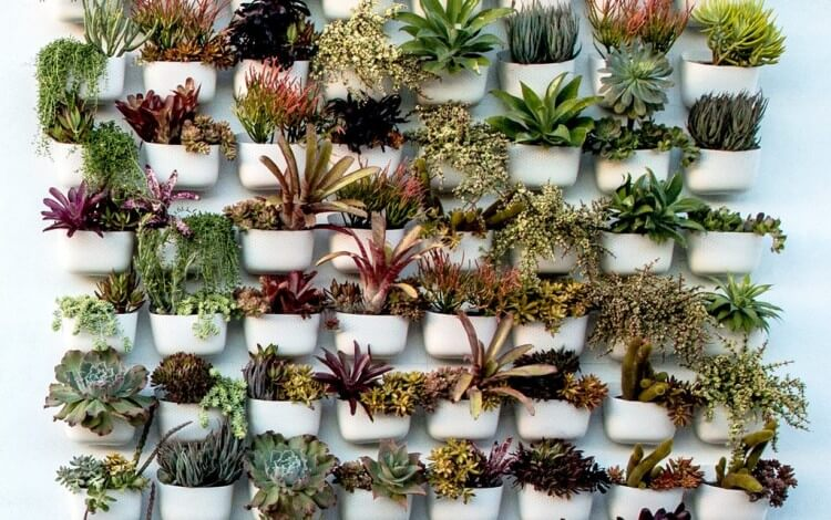 PLANT-WALL-SOLO_copy_1024x1024