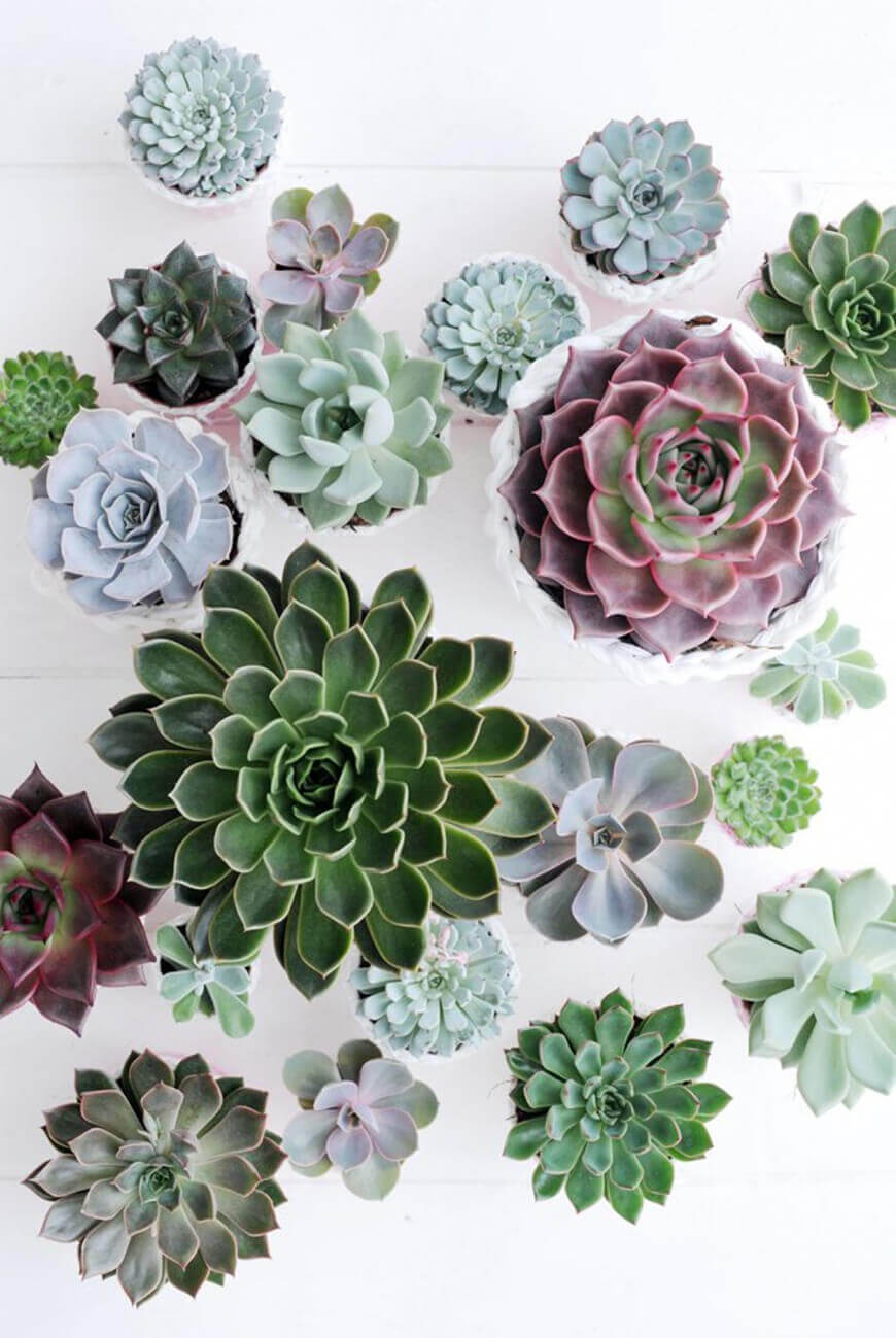 decoracao-plantas-ambientes-internos-studio-lab-decor-8