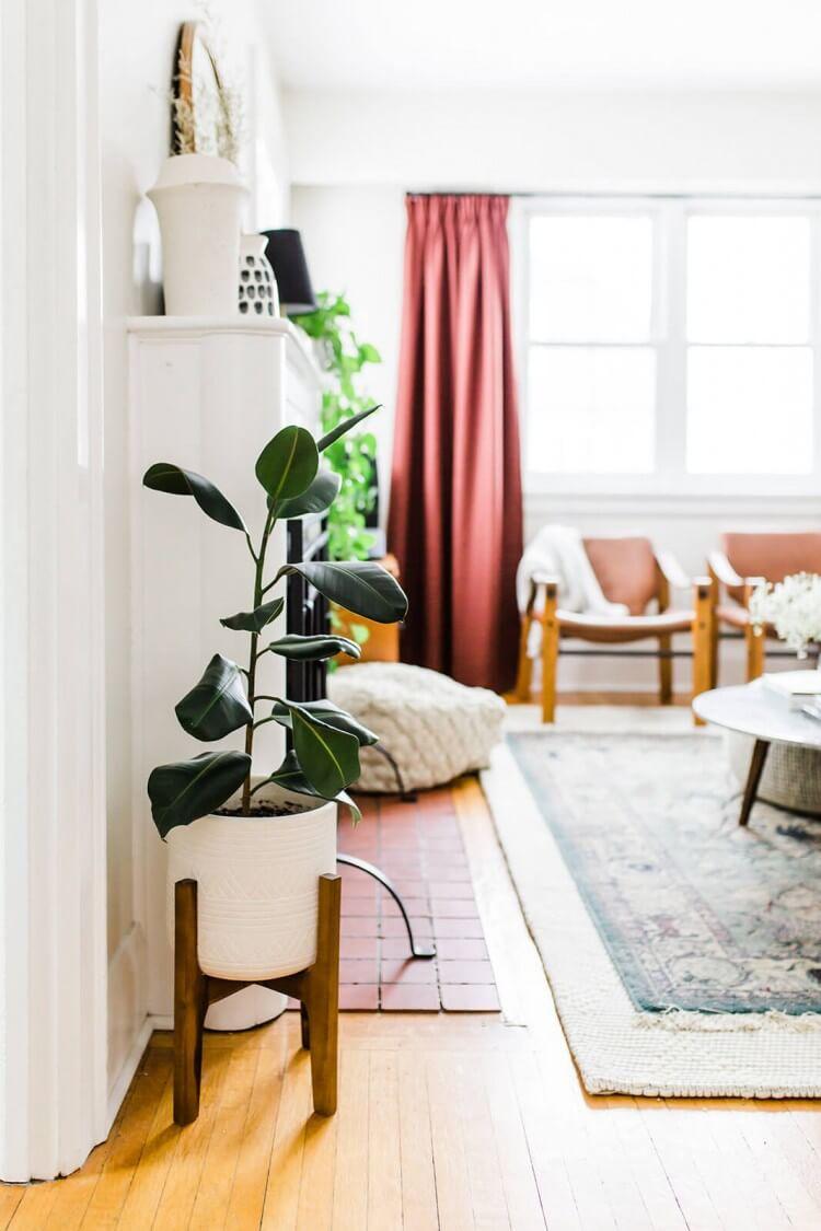 plantas-adequadas-para-apartamento