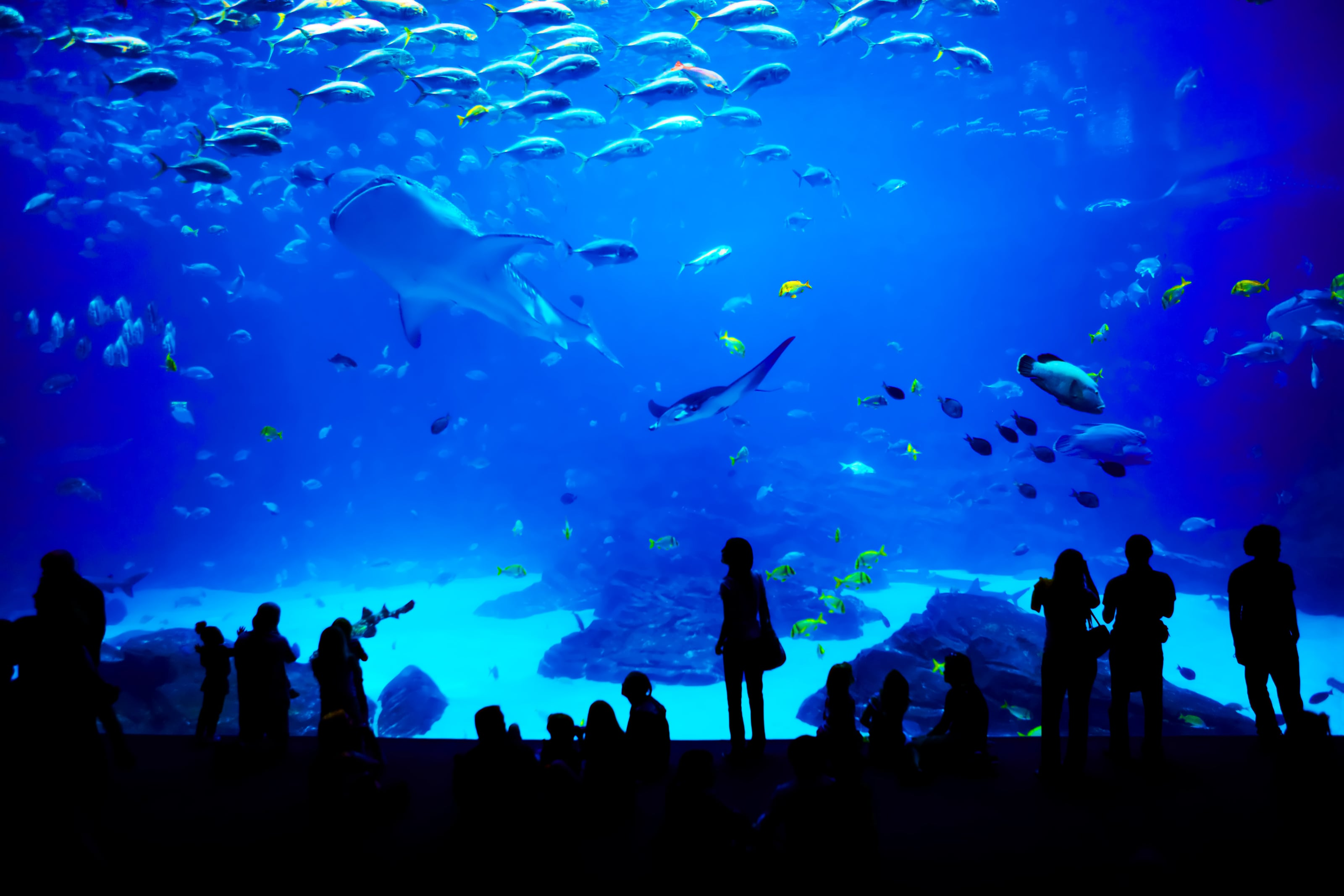 New Jersey's Adventure Aquarium Named One of the Best in the