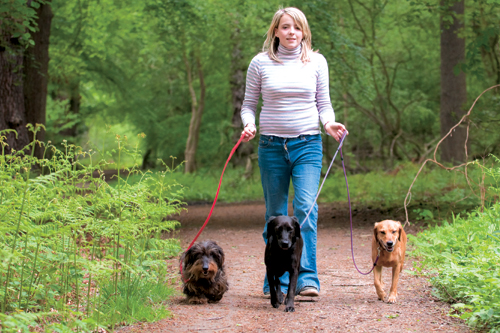 Teen walking dogs for a job