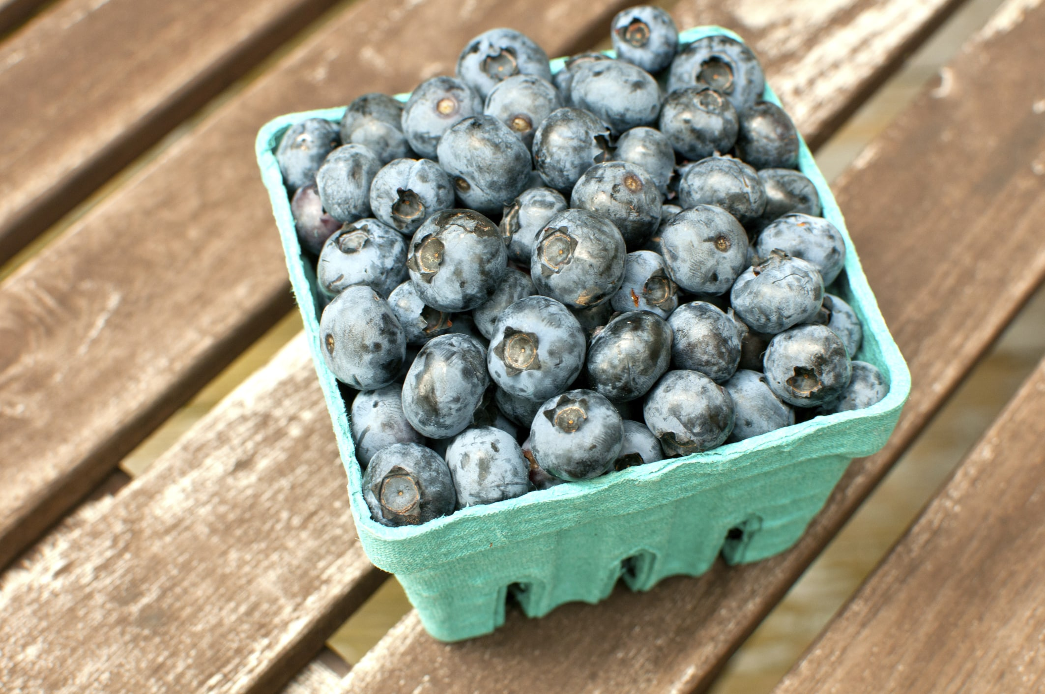 Where to Pick Your Own Blueberries in NJ - NJ Family
