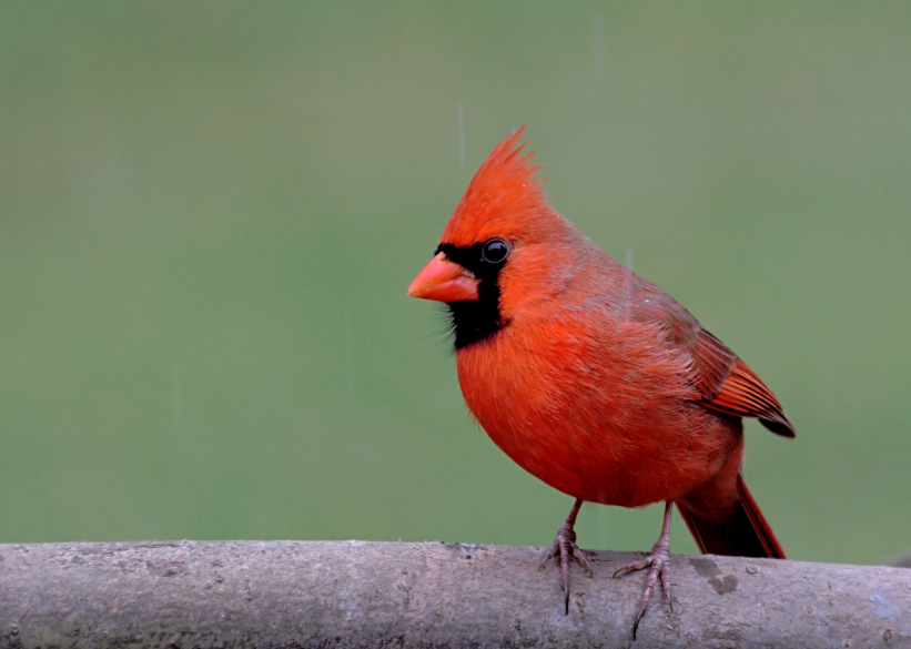 63f5b7b10cd The Birds of NJ  Here s How to Figure Out What You re Seeing In Your ...