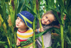 The Best Corn Mazes in NJ