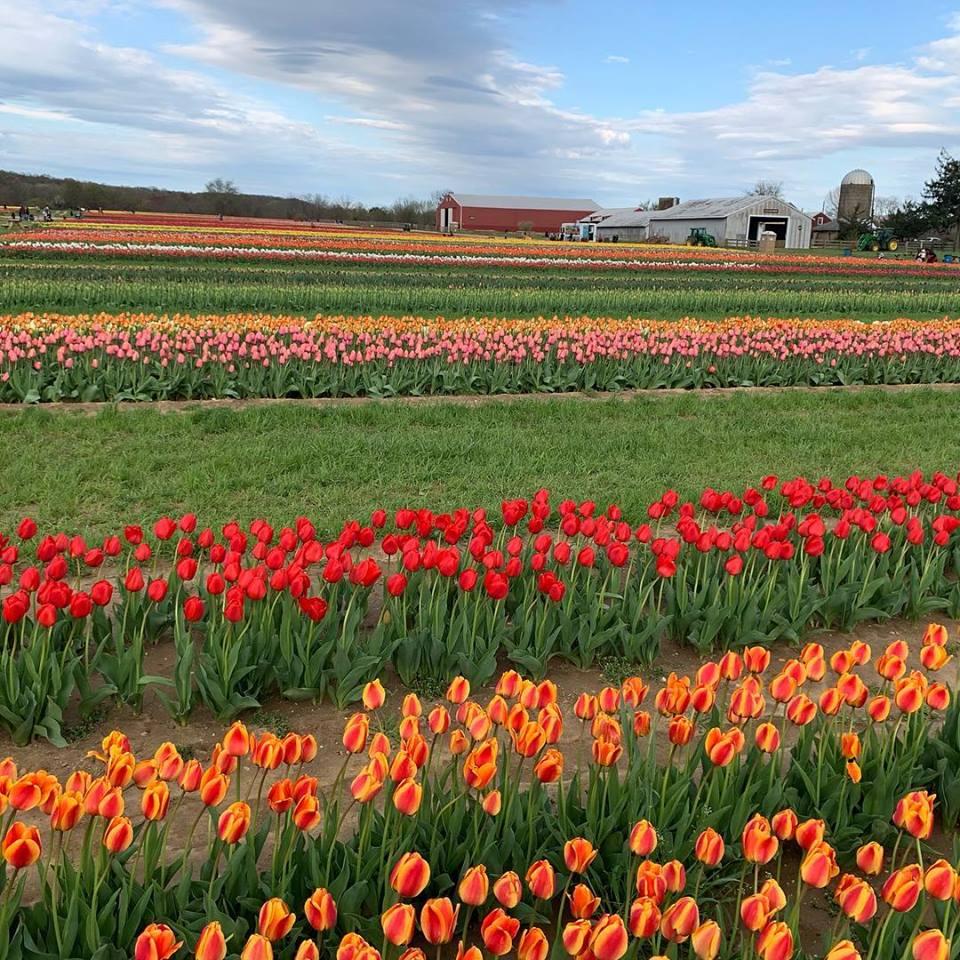 Holland Ridge Farms
