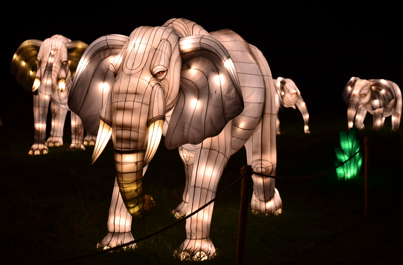 Bronx Zoo Holiday Lights elephant display