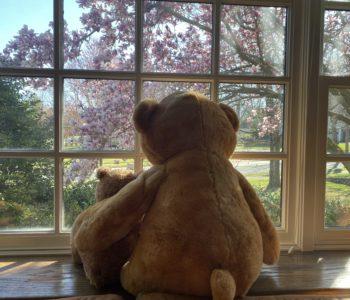 teddy bear scavenger hunt