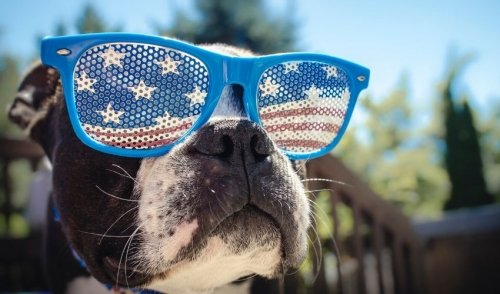 Celebrating Your Dog's Peace of Mind During Holiday Fireworks