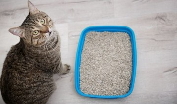 Non-Health Reasons Your Cat Has Stopped Using the Litter Box