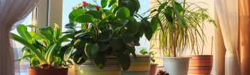 Fill Your Home with Beautiful Plants...