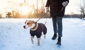 Winter Walking Tips With Your Dog