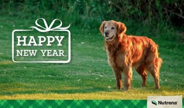New Year's Resolutions for Pets
