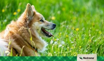 Spring Allergies in Pets