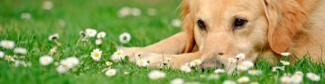 Prepare Your Pet for Spring!