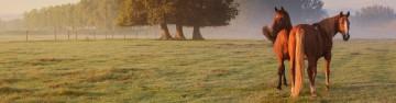 Farm • Field • Stable