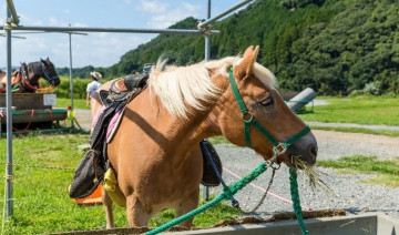 The Consequences of Vitamin E Deficiency in Horses