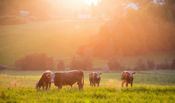 Grass Tetany in Livestock