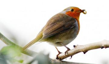 Summer Wild Bird Safety Tips
